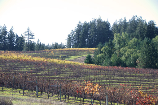 Nobles Vineyard, Fort Ross-Seaview, Sonoma County, Fort Ross, CA